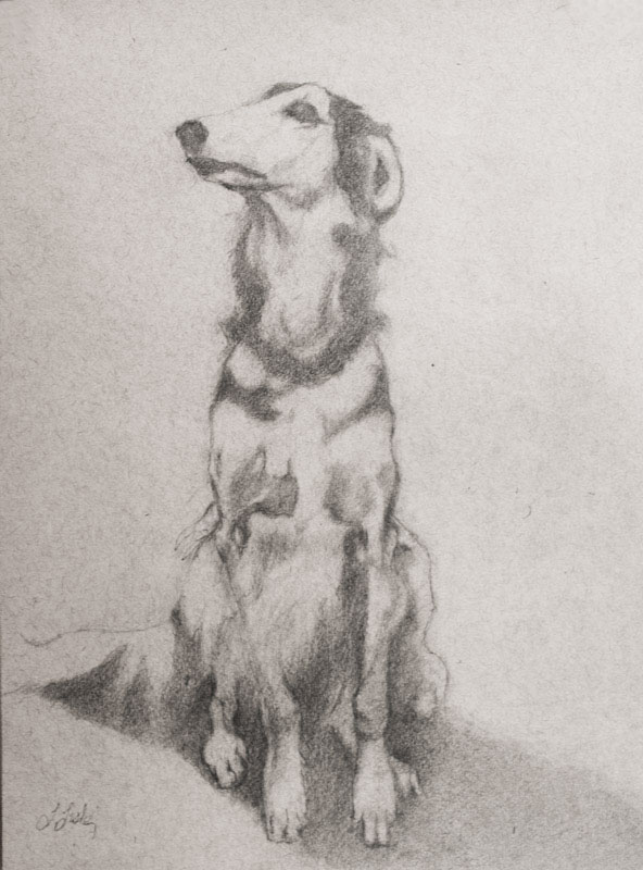 Linda Leslie, Drawings, 2015-6, Dog (Sally), graphite-paper
