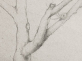 Linda Leslie, Drawings, 2015-7, Tree, graphite-paper