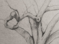 Linda Leslie, Drawings, 2015-8, Tree, graphite-paper